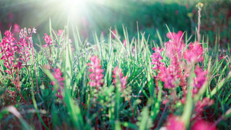 Spring nature background with green grass and flowers Banco de Imagens