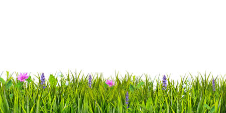 Green grass and wild flowers isolated on white background Banco de Imagens