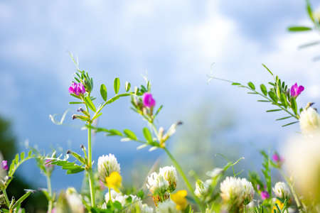 Spring or summer nature background with green grass, wildflowers and bokeh