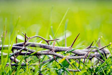 Crown of thorns in green grass. Easter background Banco de Imagens