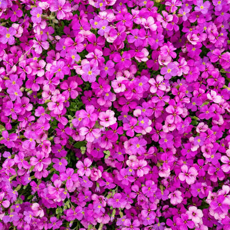 Spring nature background with pink flowers Banco de Imagens
