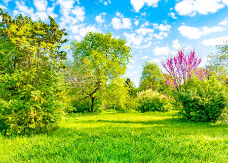 Backyard and garden with trees, green grass on lawn and blue sky with white clouds