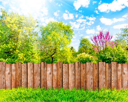 Wooden garden fence at backyard, green grass and blue sky with white clouds Banco de Imagens