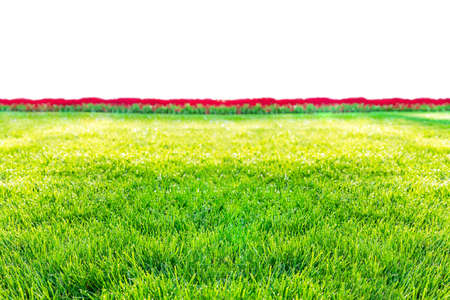 green grass and flowers isolated on white background