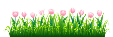 Pink tulips with green grass isolated on white background. Vector illustration