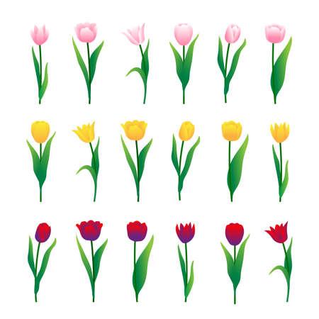 Colorful tulips set isolated on white background. Vector illustration