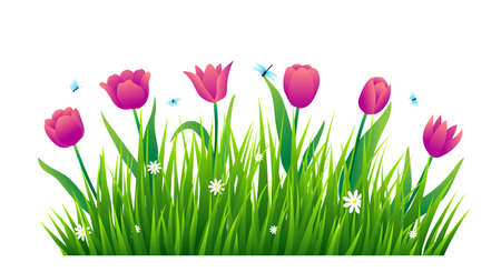 Tulips with green grass isolated on white background. Vector illustration