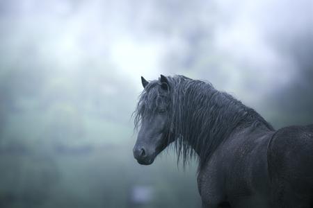 black stallion Reklamní fotografie