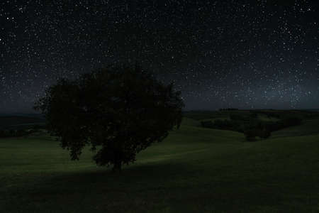 Tree under a starry night sky Banque d'images
