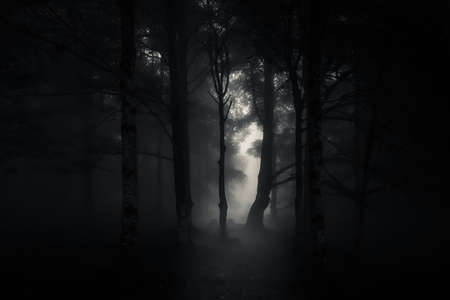 mysterious and scary forest by night