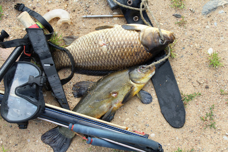 spearfishing: spearfishing Stock Photo