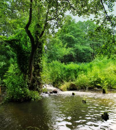 Forest river. Belarus.Grodno region.