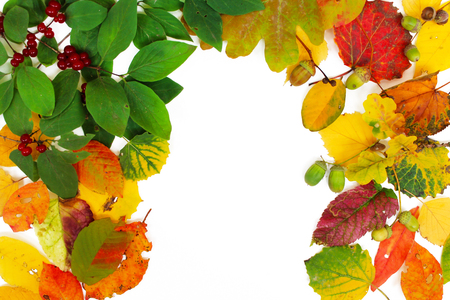 Autumn background. Colorful leaves isolated on white background.
