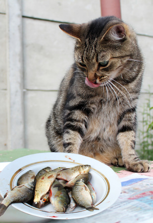 humor: Funny cat looking at the fish and licking his chops