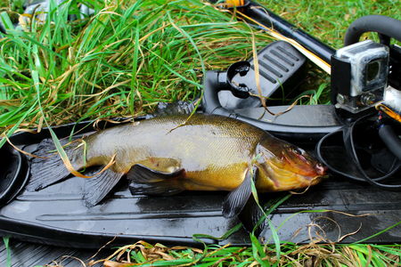 Equipment for spearfishing and caught fish on the grass.