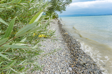 Beautiful tree on the shore of Lake Constance. Colorful pebbles on the beach Stock fotó