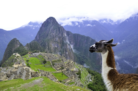 Lama looking at landscape view of Machu Picchu, the Lost City of the Incas Stock Photo