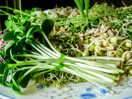 Sunflower sprout bundle with variety of sprouts