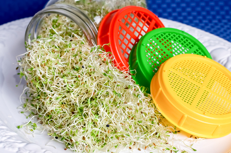 Alfalfa sprouts coming out of jar, three different color lids beside