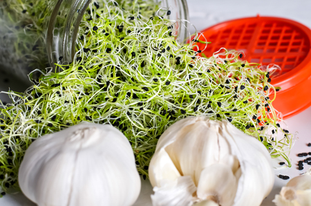 Garlic sprouts coming out of jar, seeds, whole garlic and red lid beside