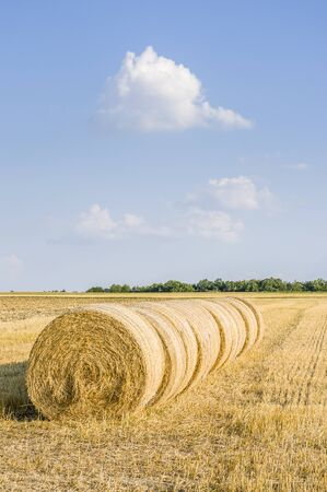 several round straw bales in a row on stubble field in sunshine and blue sky