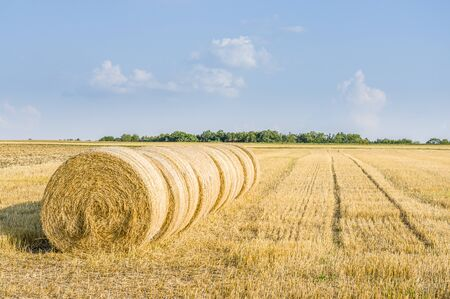 several round straw bales in a row on stubble field in sunshine and blue sky Standard-Bild