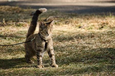 公園でかわいい子猫