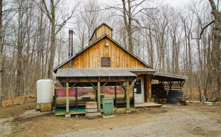 This is a typical sugar shack in Quebec where tree sap is boiled into maple syrup.