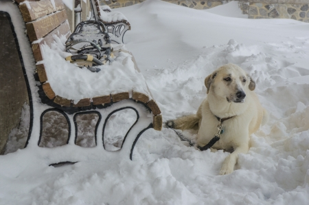 Dog waiting for his owner in snow