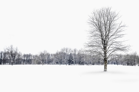montreal: Winter trees in snow, Montreal