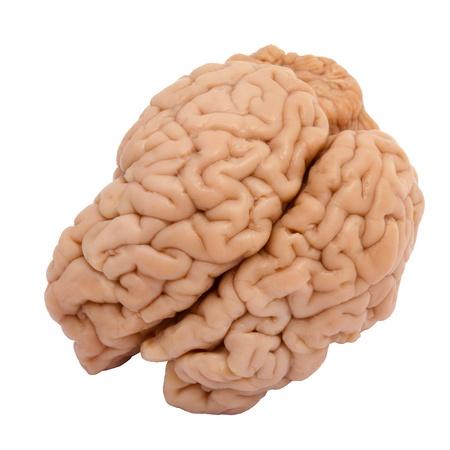 Kalfsvlees hersenen op een witte achtergrond Stockfoto - 18732531