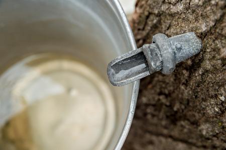 メープル樹液をバケツに滴下 写真素材