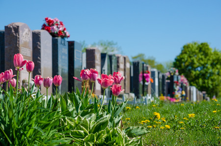 headstones: Aligned headstones in a cemetary with pink tulips in the foreground Stock Photo