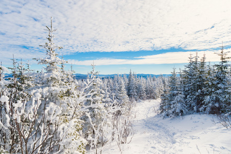 Beautiful snowy landscape in the Quebec eastern townships region, Canada