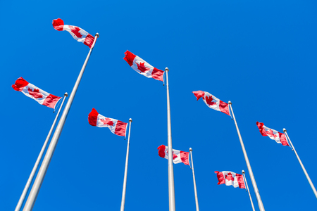 Many Canadian flags waving over blue sky