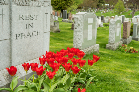 gravesite: Headstones in a cemetary with red tulips and rest in peace inscription. Stock Photo