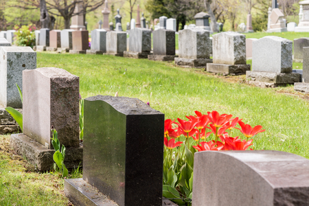 headstones: Headstones in a cemetary with many red tulips Stock Photo