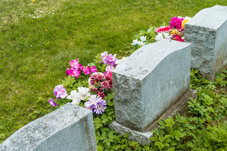 gravesite: Headstones in a cemetary with many red tulips Stock Photo