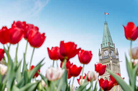 議会カナダのオタワ、カナダのチューリップ祭り (2016) の期間中に、フォア グラウンドで赤いぼかしチューリップの平和の塔 写真素材