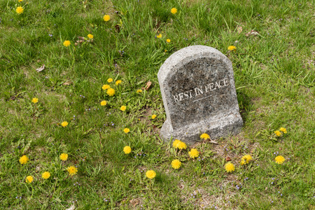 gravesite: Round top tombstone with rest in peace inscription and dandelions in a cemetery