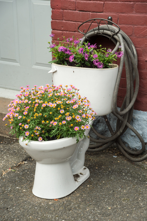 salvaging: Flowers growing in an old toilet Stock Photo