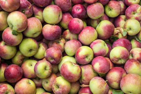 市場でロボと言うりんご 写真素材