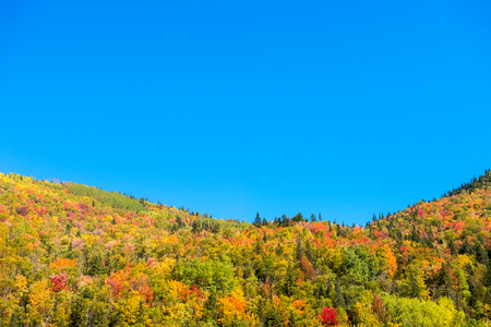vibrance: Autumn colors on Chic-Chocs mountains in Gaspesie, Quebec, Canada. Stock Photo
