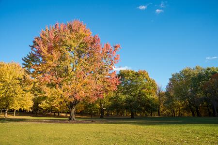 몬트리올, 캐나다에서 마운트 - 로얄에 단풍 나무.