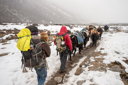 snowstorm: Khumbu region, Nepal - 15 March 2015:  Trekkers, sherpas and yak shepherds in the Himalayan Regions during snowstorm