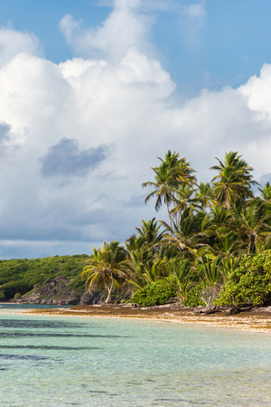 Beautiful exotic Caribbean beach with palm trees in Martinique (Anse Michel) Stock Photo