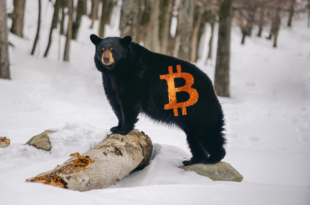 Bear with a Bitcoin logo on fur, illustration bearish trend in crypto currency market Imagens