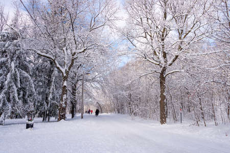 Montreal, CA - 01 January 2020: People walking on a snowy trail in Montreal's Mount Royal Park (Parc Du Mont-Royal) after snow storm. Editorial