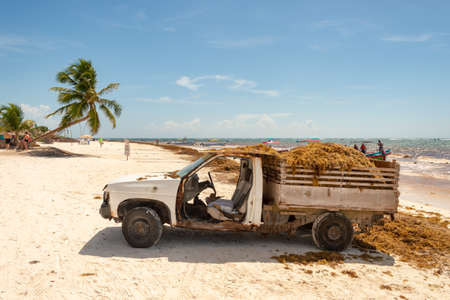 Tulum, Mexico - 5 August 2018: truck loaded with Sargassum seaweed at Playa Paraiso.