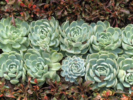 flowers and succulents in a flower bed in neutral light
